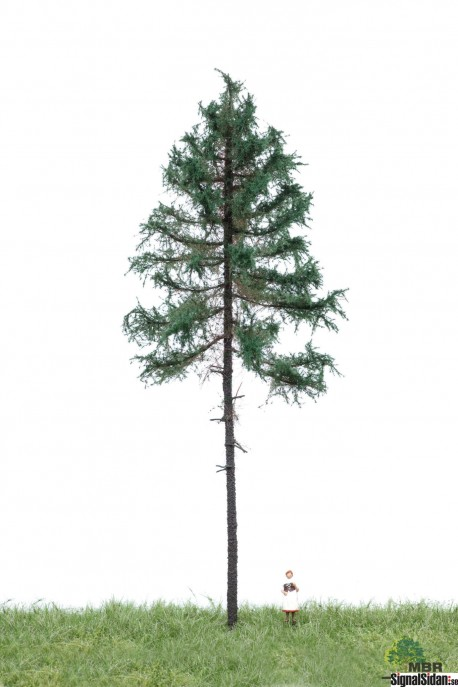 Skogsgran 18-22cm [51-4301]