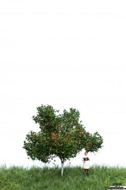 Äppelträd 6-10cm [51-2304]