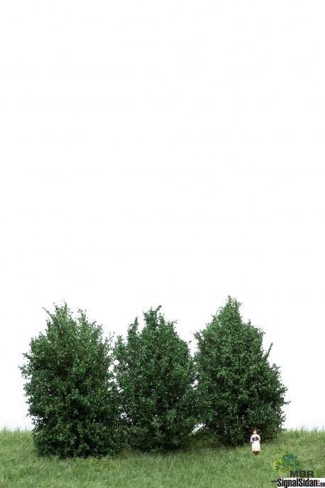 Höga Buskar 10-12cm Mörkgrön [50-4001]