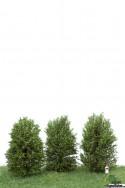 Höga Buskar 10-12cm Ljusgrön [50-4002]