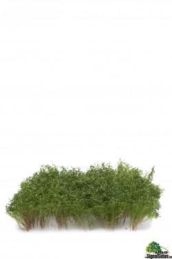 Delbara buskar Mörkgrön [50-5001]