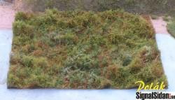 Skogsmark - Variant A [9811]