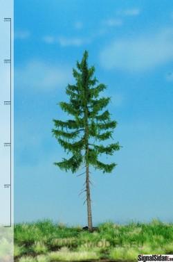 Skogsgran 18-22cm [51-4305]