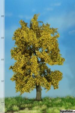 Ek höstfärger18-22cm [52-2303]