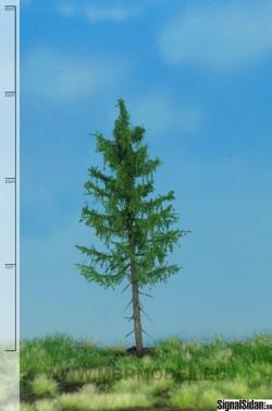 Skogsgran 12-16cm [51-4205]