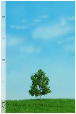 Bok 6-10cm [51-2102]